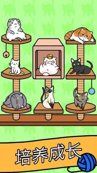 猫咪公寓游戏安卓版图片1
